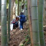 Bamboo shoot photo001