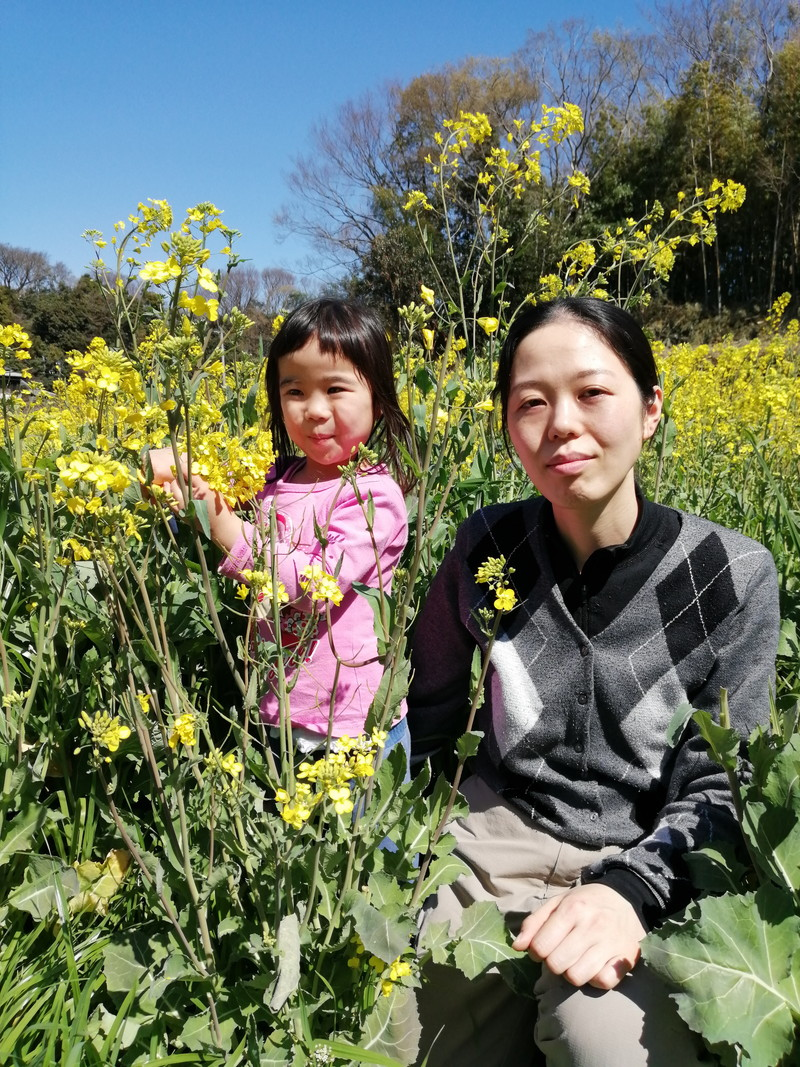 Photo of picking rape blossoms 3
